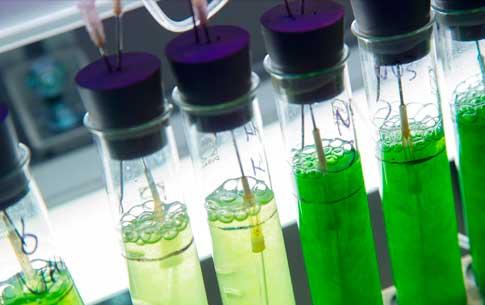 Aquatische biomassa