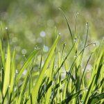Foto: Go-Grass
